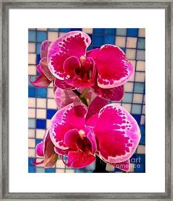 Hawaiian Orchid 1 Framed Print
