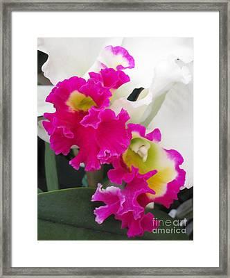 Hawaiian Orchid 10 Framed Print by Randall Weidner
