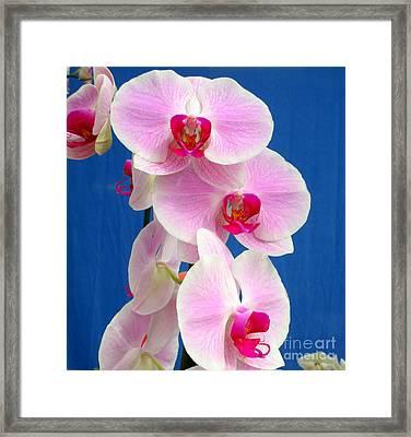 Hawaiian Orchid 12 Framed Print