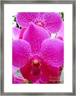 Hawaiian Orchid 14 Framed Print