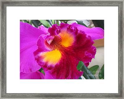 Hawaiian Orchid 2 Framed Print by Randall Weidner