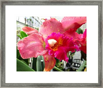 Hawaiian Orchid 20 Framed Print