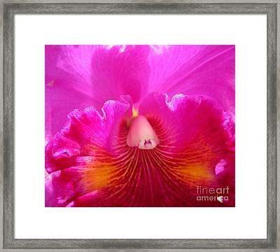 Hawaiian Orchid 21 Framed Print by Randall Weidner