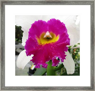 Hawaiian Orchid 22 Framed Print