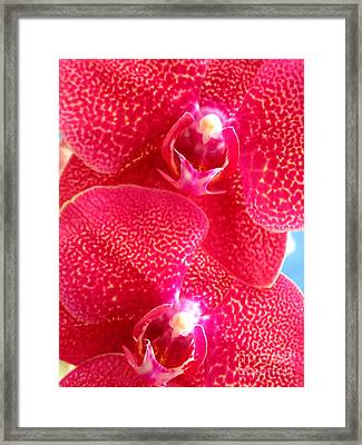 Hawaiian Orchid 25 Framed Print