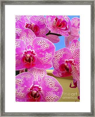 Hawaiian Orchid 27 Framed Print by Randall Weidner