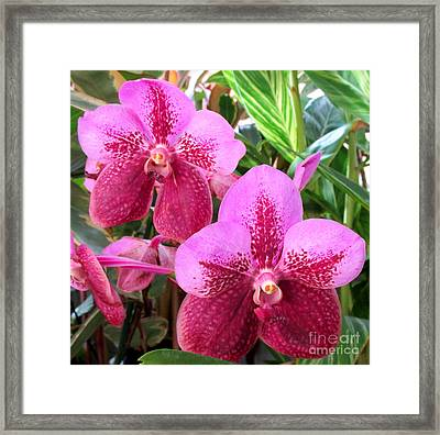 Hawaiian Orchid 29 Framed Print