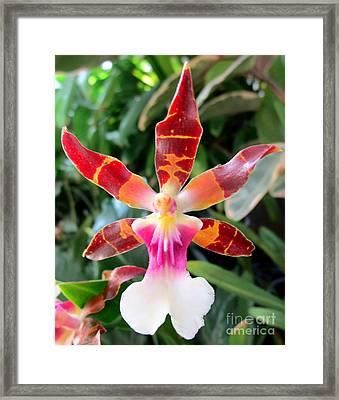 Hawaiian Orchid 30 Framed Print