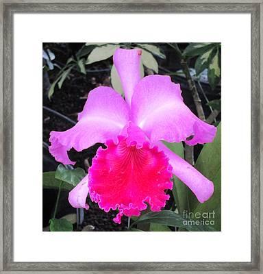 Hawaiian Orchid 33 Framed Print