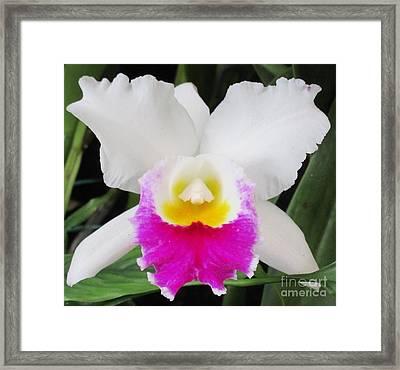 Hawaiian Orchid 34 Framed Print