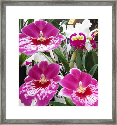 Hawaiian Orchid 5 Framed Print