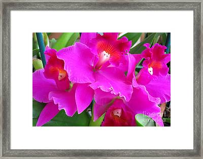 Hawaiian Orchid 8 Framed Print