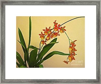 Hawaiian Orchid Spray Framed Print