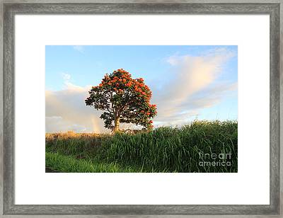 Somewhere Over The Rainbow Framed Print by Anthony Jones