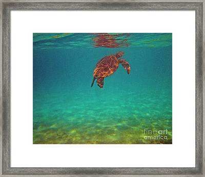 Hawaiian Sea Turtle - Floating Framed Print