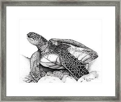Hawaiian Sea Turtle Framed Print