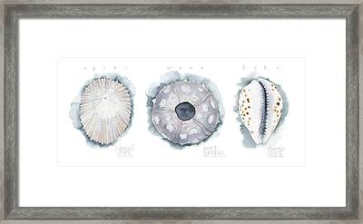 Hawaiian Seashells Framed Print by Kirsten Carlson