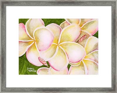 Hawaiian Tropical Plumeria Flower #483 Framed Print by Donald k Hall