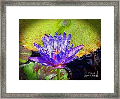 Hawaiian Water Lily Framed Print by Sue Melvin