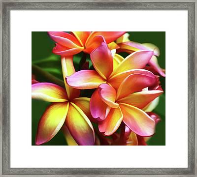 Hawaiin Plumeria Wall Art Framed Print