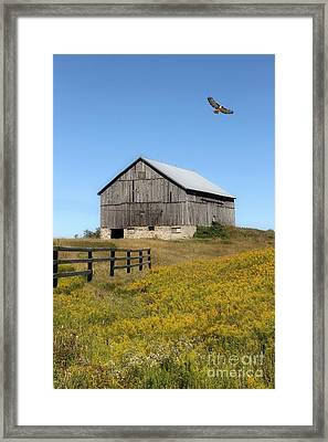 Hawk And Barn Framed Print by Anthony Djordjevic