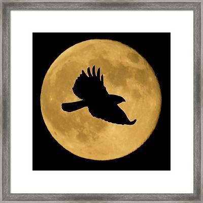 Hawk Flying By Full Moon Framed Print
