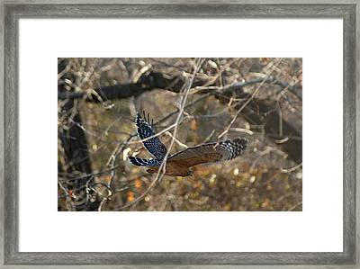 Framed Print featuring the photograph Hawk In Flight by Rick Friedle