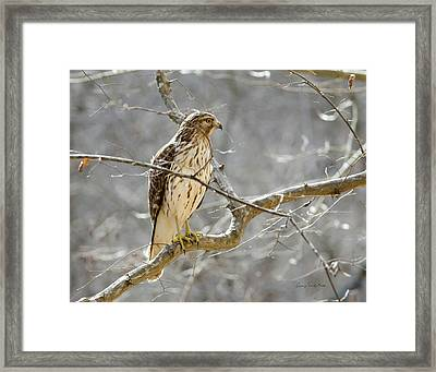 Hawk On Lookout Framed Print by George Randy Bass