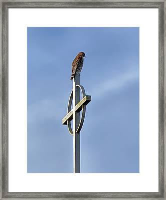Hawk On Steeple Framed Print by Richard Rizzo
