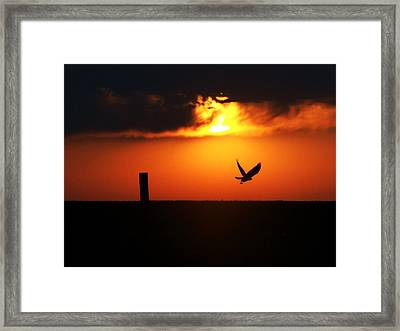 Hawk Rising With The Sun Framed Print