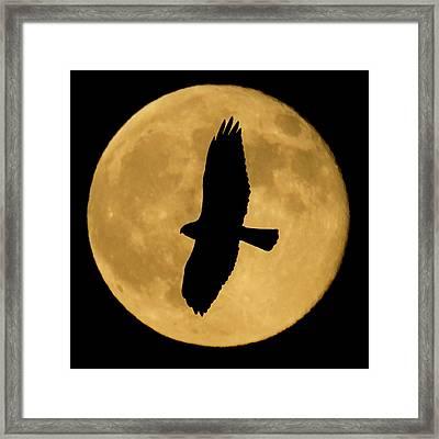 Hawk Silhouette Framed Print