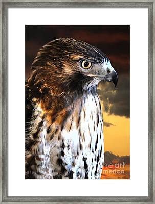 Hawk Sunset Framed Print by Adam Olsen