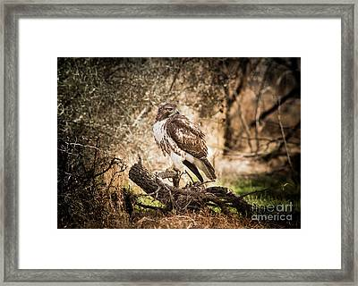 Hawk Through A Thicket Framed Print by Robert Frederick
