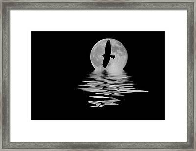 Hawk In The Moonlight 2 Framed Print