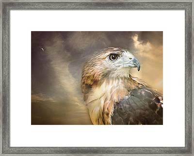Hawkeyed Framed Print by Heather Applegate