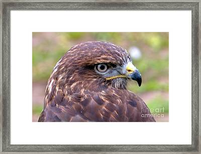 Hawks Eye View Framed Print by Stephen Melia