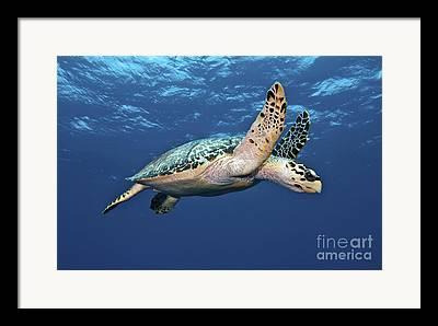 Ocean Images Framed Prints