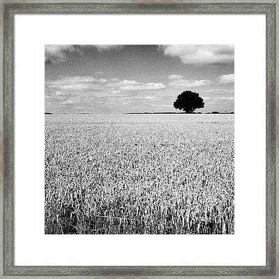 Hawksmoor Framed Print by John Edwards