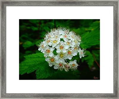 Hawthorn Hearts Framed Print