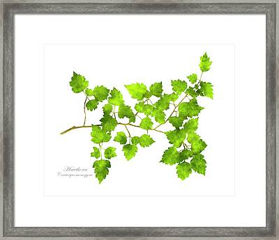 Hawthorn Pressed Leaf Art Framed Print by Christina Rollo
