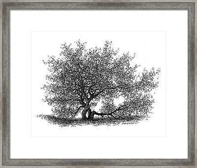 Hawthorne In The Spring Framed Print by Steven Hawkes