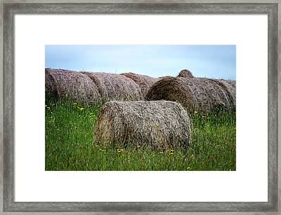 Hay Bales Among The Wildflowrs Framed Print