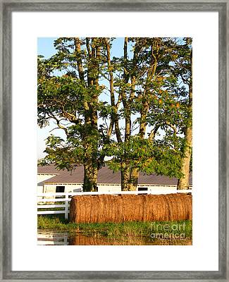 Hay Bales And Trees Framed Print