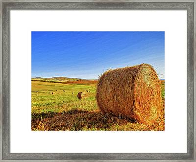Hay Bales Framed Print by Dominic Piperata