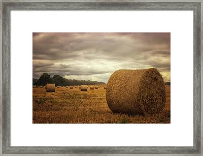 Hay Bales Framed Print by Martin Newman