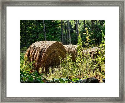Hay Bay Rolls Framed Print by Lanjee Chee