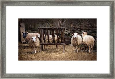 Hay Day Framed Print by Robin-Lee Vieira