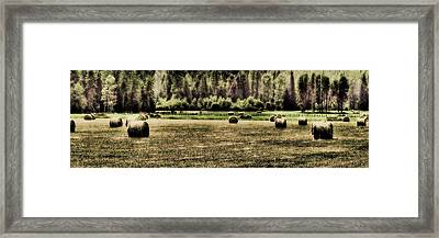 Hay Harvest Framed Print by David Patterson