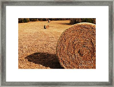 Hay In The Field Framed Print by Tamyra Ayles