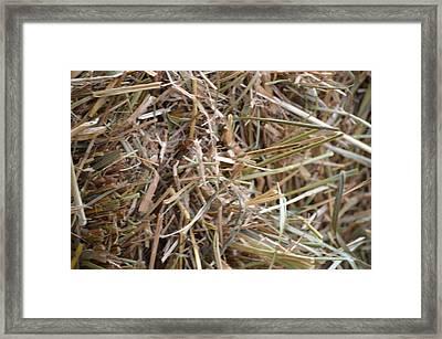 Hay Framed Print by Linda Geiger